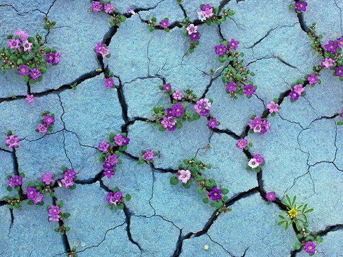 pustinjski cvet.blacksheep.rs
